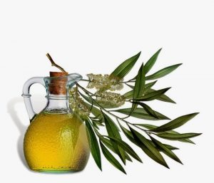 health-benefits-tea-tree-oil-1